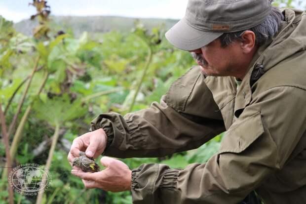 Красоты России. В погоне за синей птицей: что мечтают найти орнитологи на Курильских островах