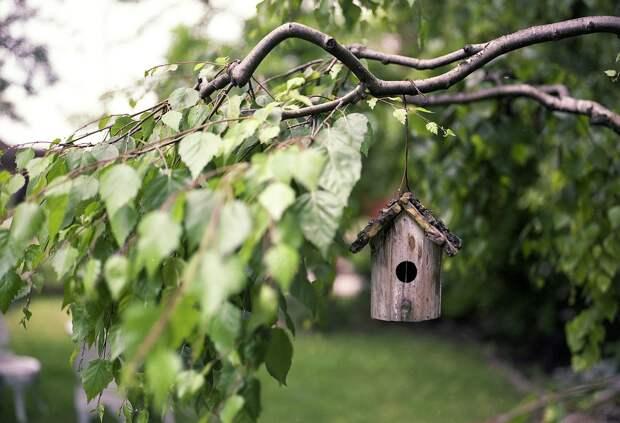 Кормушки Для Птиц, Отраслей, Задний Двор, Листья