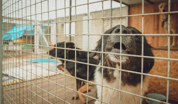 «Страшно выносить мусор»: волгоградцы снова жалуются на засилье бродячих собак