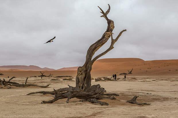 Путешествие к Мертвому болоту Намибии
