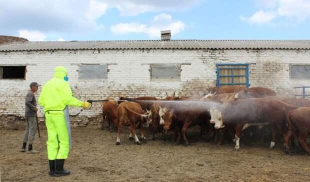 Более 1тыс литров препарата против клещей поступило вРостовскую область