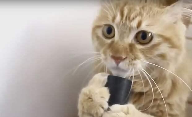 Кот, который не боится пылесоса
