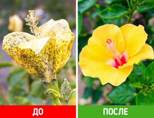 5 уникальных свойств соды, которые позволят преобразить ваш сад