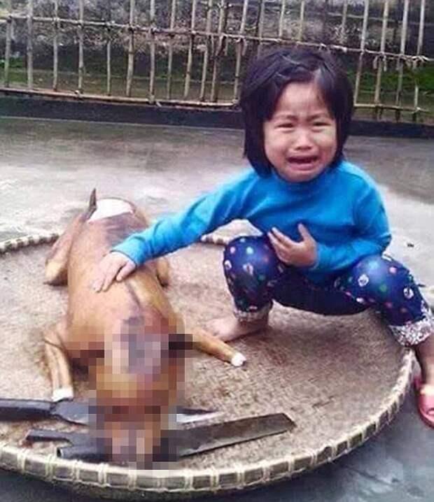 5-летняя вьетнамская девочка нашла свою пропавшую собаку на разделочном столе мясного ларька