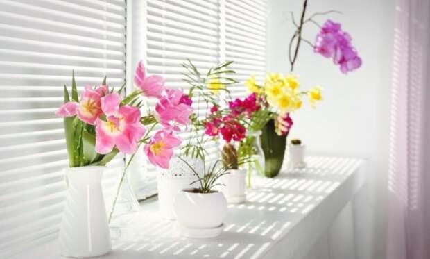 Свет для цветущих растений