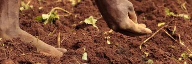 углеродное фермерство: Органическое земледелие, пермакультура