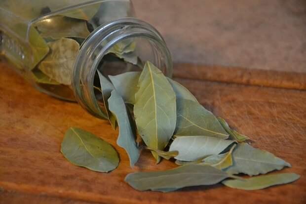 Лечебные свойства лаврового масла