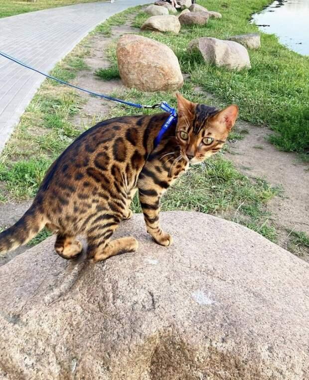 «Леопард» с Ангарских прудов любит предаваться созерцанию