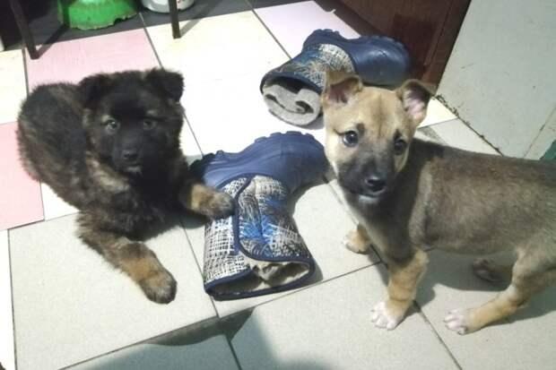 В морозы к приюту подкинули крохотного щеночка волонтер, дворняга, приют, собака, щенок