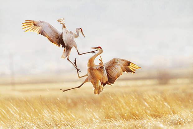 Птичий конкурс Audubon Photography Awards 2015