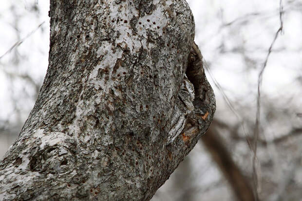 owl-camouflage-disguise-28