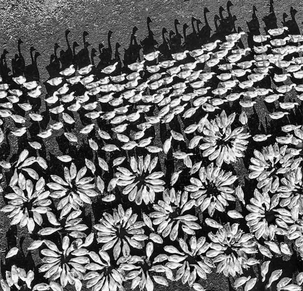 25 победителей конкурса фотографий с дронов и их снимки захватывает дух