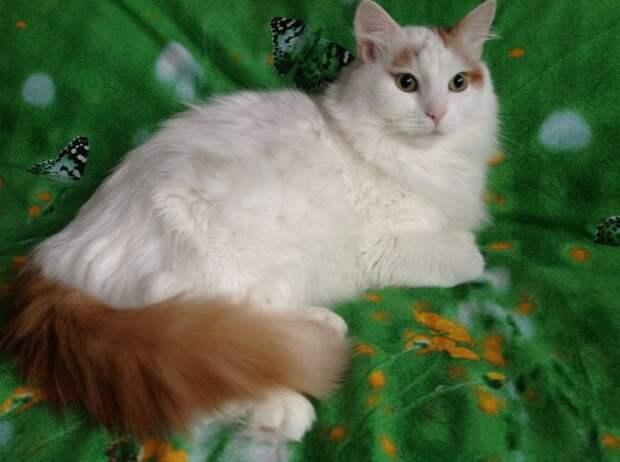 Добрая история дачного кота Паши