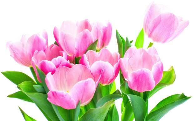 Букет цветов, тюльпаны, розовые обои, фото, картинки.