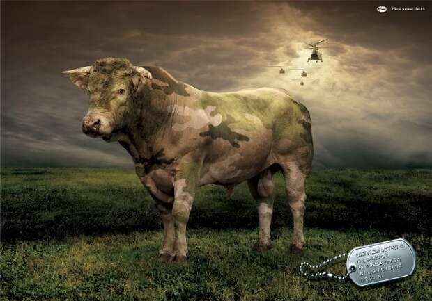Апокалипсис для рогатого скота
