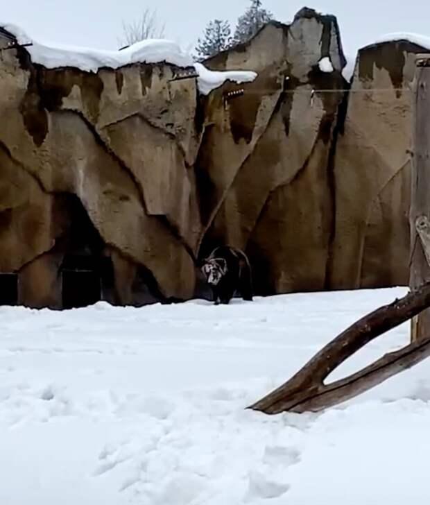 В Зоопарке Удмуртии проснулся бурый медведь Гоша