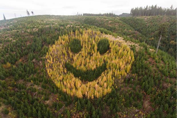 Гигантский смайлик из деревьев на склоне холма в Орегоне / Бонусная всячина  / ВАРНЕТ