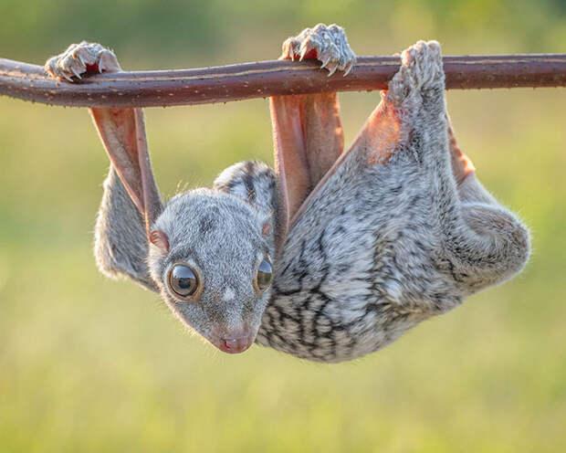 9 умилительных фото детенышей редких животных