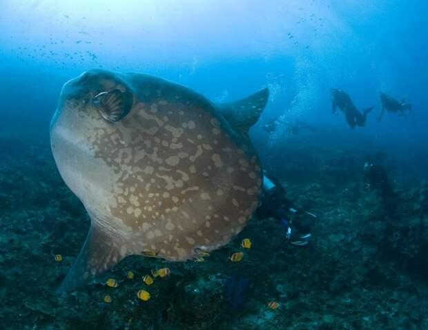 prichudlivieribi 4 10 самых причудливых рыб мирового океана