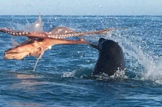 Каякеру прилетело от тюленя