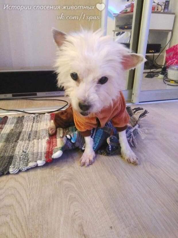 Вот эту полумертвую собаку мы подобрали в феврале этого года.