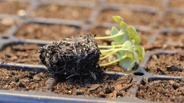 Процесс проращивания семян