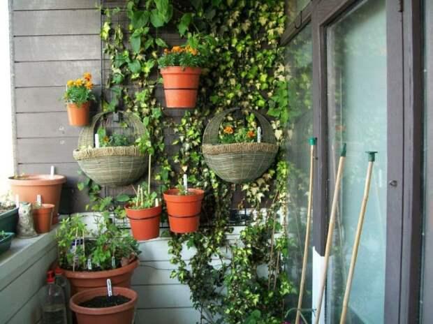 Балкон - отличное место для разного рода растений дизайн, креатив, своими руками