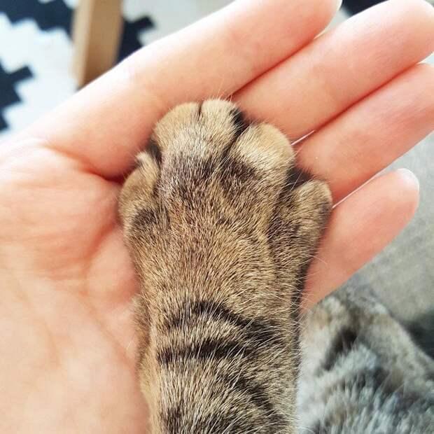 1. Ты постоянно пытаешься держать лапу кота. Да-да, и не отпирайся! домашний питомец, животные, кот, прикол, юмор