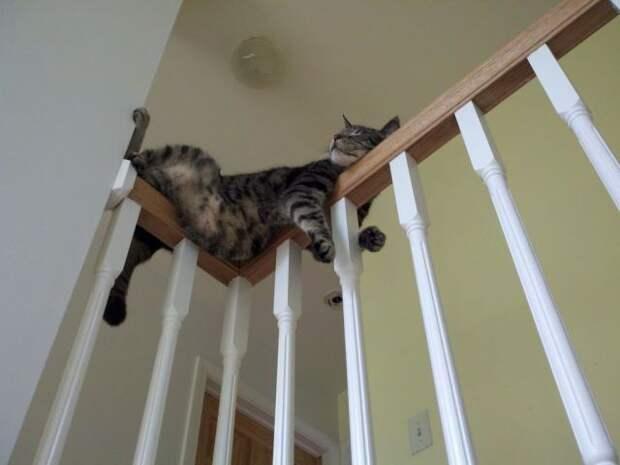 Тут лежу Я! Топ 19 котов - мастеров бросить кости