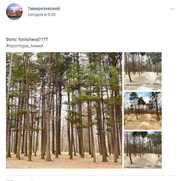 Фото дня: красота в Тимирязевском лесу