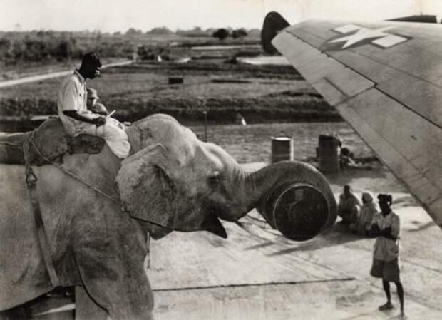 20 снимков, которые доказывают, что человечество всегда было странноватым