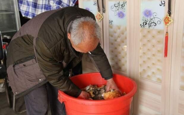 Везучий китаец нашел огромный гриб бессмертия гриб, китай