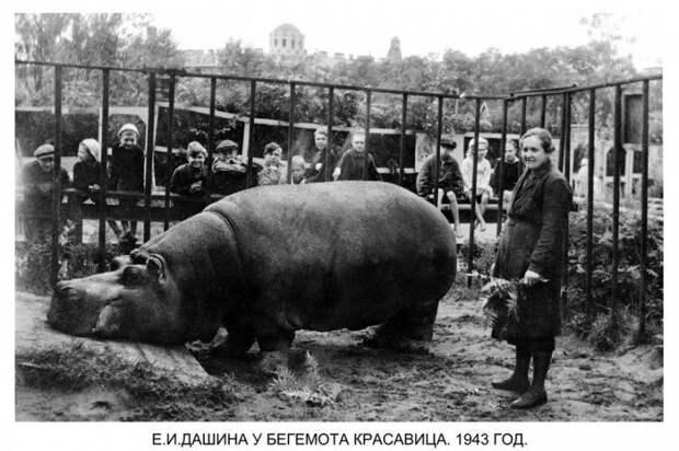 Как переживали блокаду звери Ленинградского зоопарка
