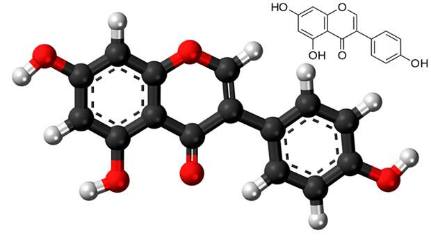 Рисунок 10. Атомная модель и химическая структура фитоэстрогена генистеина «Википедия»