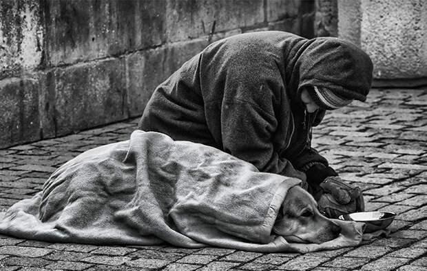10. Бездомный и его собака бездомный, любовь, собака