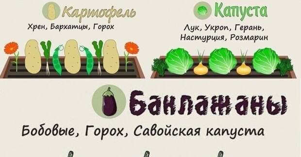 20 памяток и полезных советов для дачи Лайфхак, дача, огород, полезные советы, сад