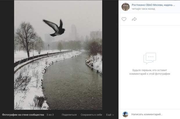 Фото дня: над Яузой запечатлели голубя, борющегося со стихией