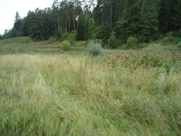 Россельхознадзор в Удмуртии выявил зарастание плодородных почв сорняками на 27 гектарах