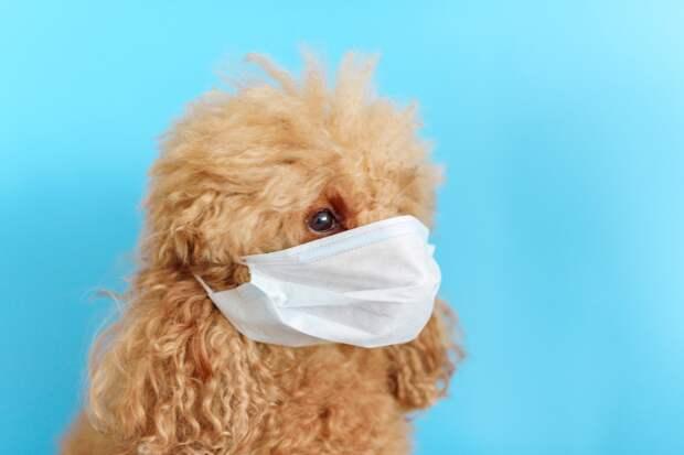 За сутки в Удмуртии скончались 17 человек с подтвержденным коронавирусом