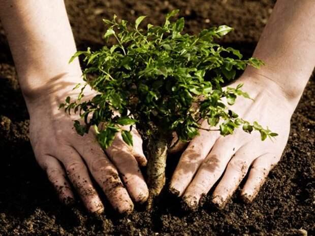 К осени в Севастополе посадят «нужные» деревья