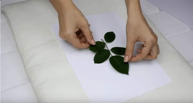 Как мгновенно высушить любые листья и цветы. Простой и работающий лайфхак