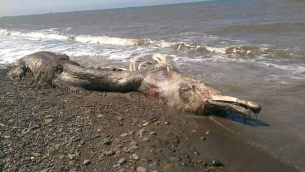 Останки неопознанного волосатого существа выбросило на берег Сахалина