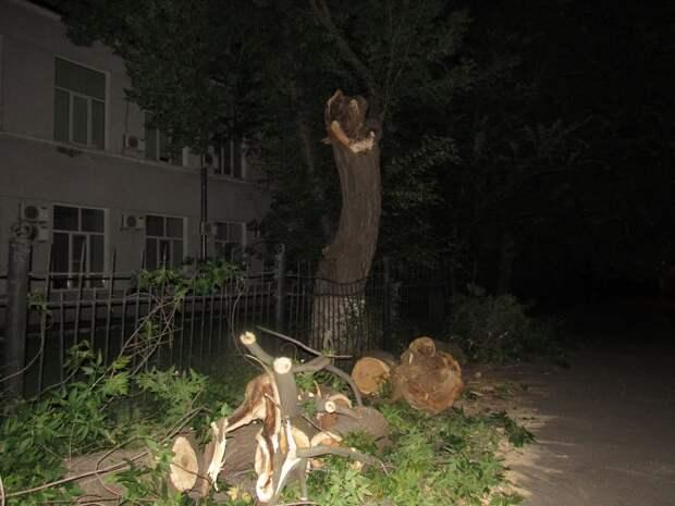 Упавшее возле поликлиники №187 дерево убрано