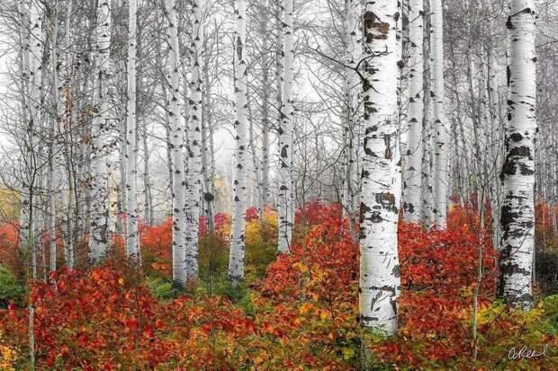 Визуальные письма любви Земле: фотограф запечатлел самые поразительные пейзажи планеты