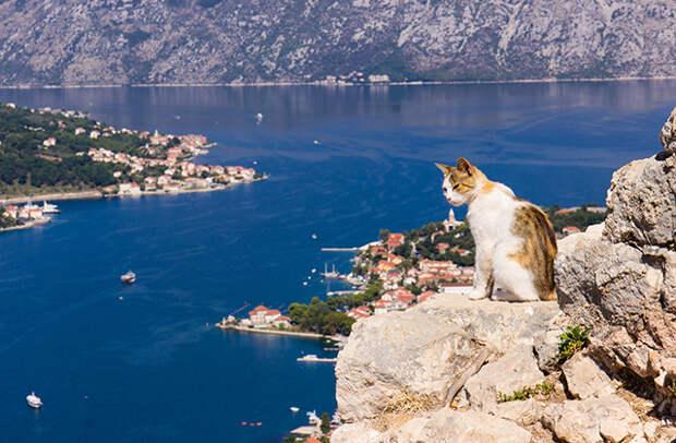 кот на горе, черногория, котор
