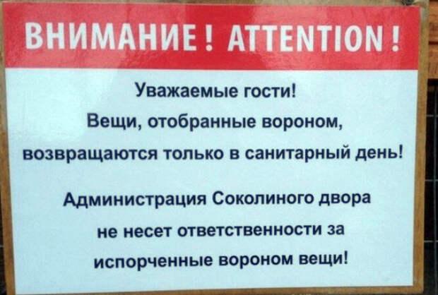 Раскулачивание ворона происходит только в строго отведенный для этого день! | Фото: MainFun.Ru.