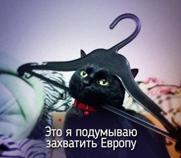 это я как котт