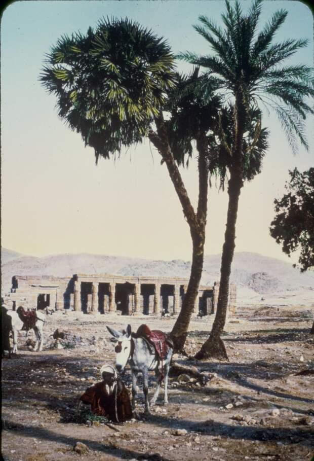 Некрополь Шейх Абд эль-Курна. 1950