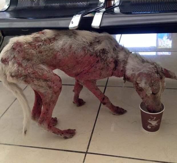 Только Богу известно, что пережила эта собака