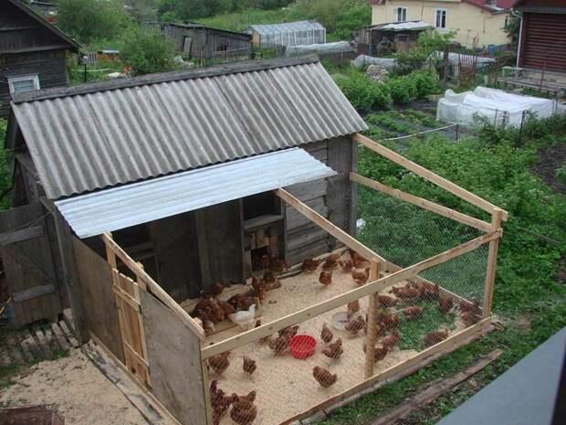 Для тех, кто выращивает кур